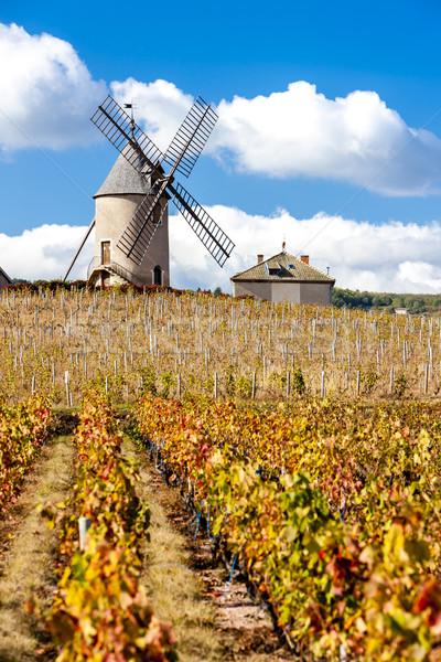 Szőlőskert szélmalom ősz építészet növény szőlő Stock fotó © phbcz