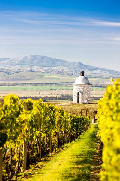 Kapel wijngaard Tsjechische Republiek natuur najaar architectuur Stockfoto © phbcz
