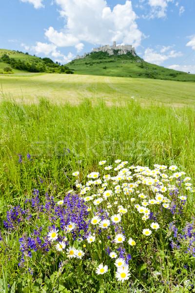 城 スロバキア 花 デイジーチェーン アーキテクチャ 歴史 ストックフォト © phbcz