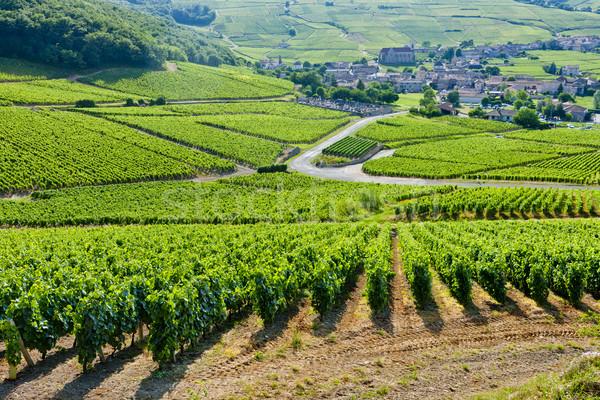 vineyards near Fuisse, Burgundy, France Stock photo © phbcz