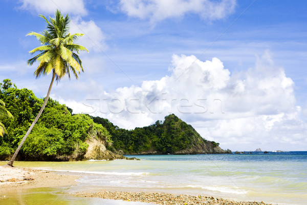 Batteaux Bay, Tobago Stock photo © phbcz