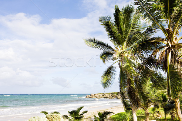 Skeete's Bay, Barbados, Caribbean Stock photo © phbcz
