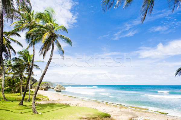 Bathsheba, Eastern coast of Barbados, Caribbean Stock photo © phbcz