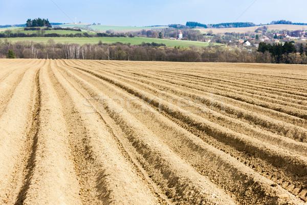 Tájkép mező Csehország természet vidék föld Stock fotó © phbcz