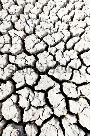 dry land, Parc Regional de Camargue, Provence, France Stock photo © phbcz