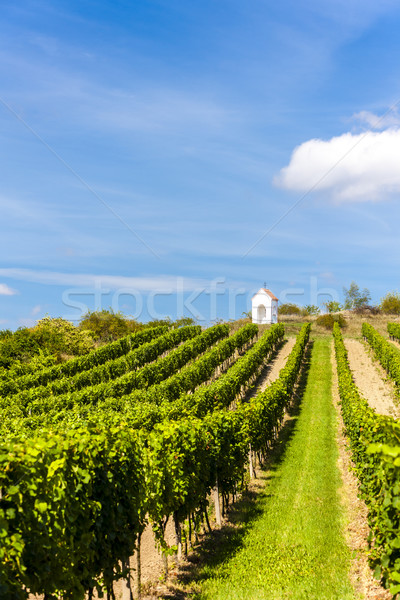 Stock photo: wayside near Hnanice with vineyard, Southern Moravia, Czech Repu