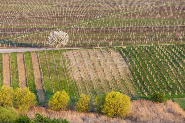 View primavera Repubblica Ceca albero panorama campo Foto d'archivio © phbcz