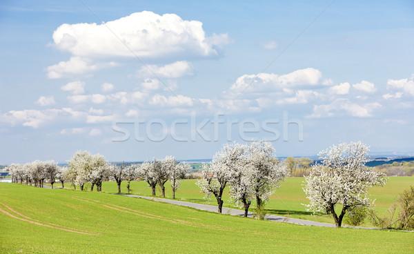 весны пейзаж дороги Чешская республика Сток-фото © phbcz