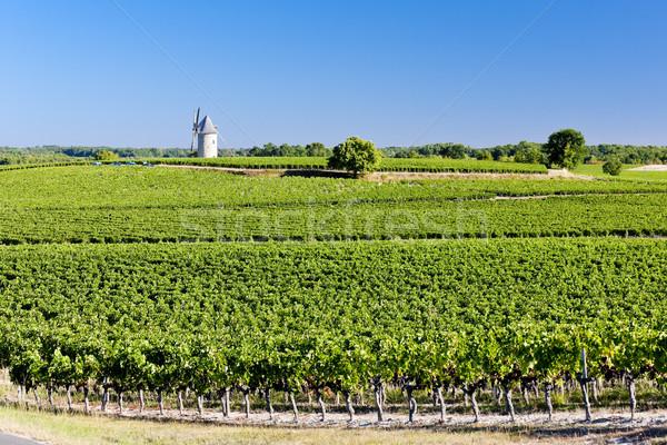 vineyard with windmill near Blaignan, Bordeaux Region, France Stock photo © phbcz