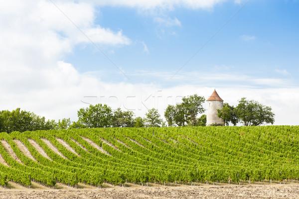 Wijngaard windmolen afdeling reizen architectuur Europa Stockfoto © phbcz