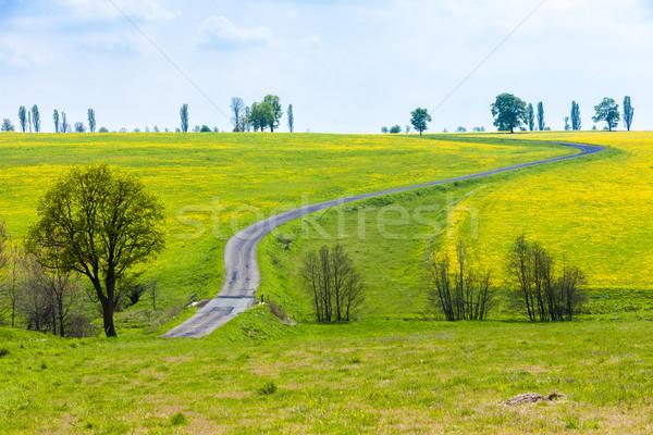 Primavera paisagem estrada República Checa árvore planta Foto stock © phbcz
