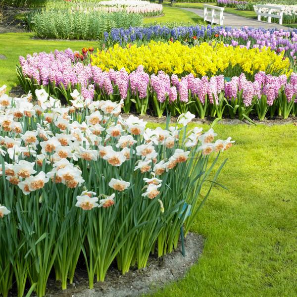 Jardins Holanda flor primavera natureza parque Foto stock © phbcz