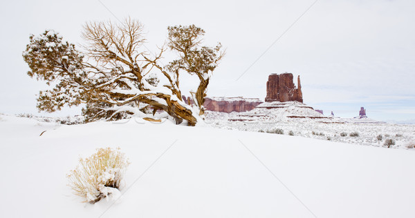 The Mitten, Monument Valley National Park, Utah-Arizona, USA Stock photo © phbcz