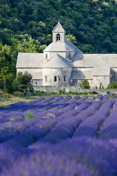修道院 ラベンダー畑 フランス 花 建物 旅行 ストックフォト © phbcz