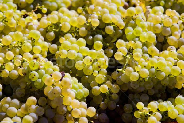 wine harvest, Czech Republic Stock photo © phbcz