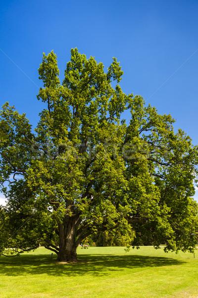 саду дворец Чешская республика Сток-фото © phbcz