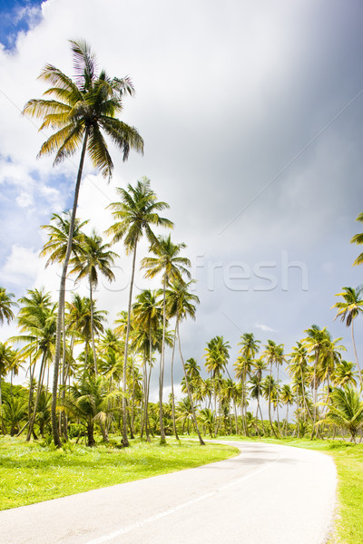 road, Cocos Bay, Trinidad Stock photo © phbcz
