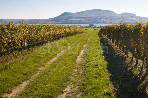 vineyard, Sonberk, Palava, Czech Republic Stock photo © phbcz
