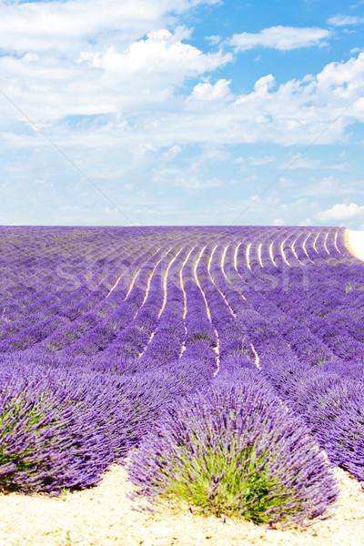 Lavendel veld plateau Frankrijk landschap wolk plant Stockfoto © phbcz