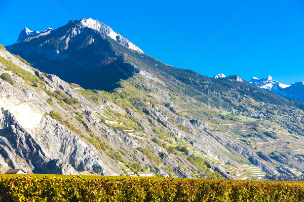 vineyards in Ardon region, canton Valais, Switzerland Stock photo © phbcz