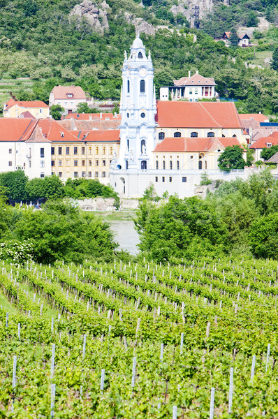 Durnstein, vineyard in Wachau Region, Lower Austria, Austria Stock photo © phbcz