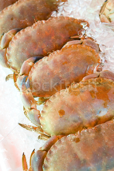 crabs Stock photo © phbcz
