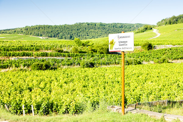 grand cru vineyards of Richebourg, Burgundy, France Stock photo © phbcz