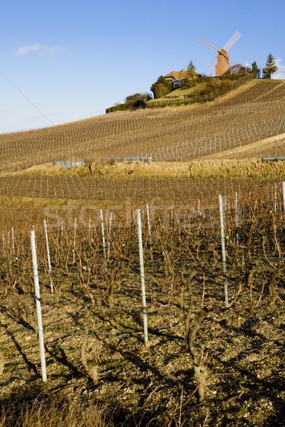 windmill and vineyard near Verzenay, Champagne Region, Burgundy, Stock photo © phbcz