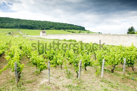 wine cellars with vineyard in Retz region, Lower Austria, Austri Stock photo © phbcz