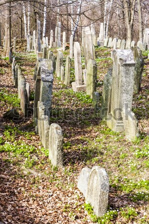 Jewish cemetery, Batelov, Czech Republic Stock photo © phbcz
