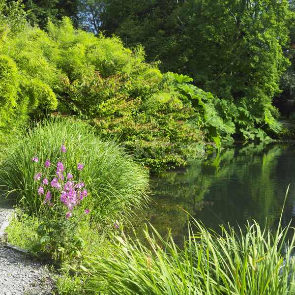 Kilmokea Gardens, County Wexford, Ireland Stock photo © phbcz