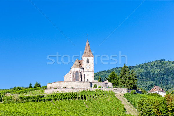 church with vineyard, Hunawihr, Alsace, France Stock photo © phbcz