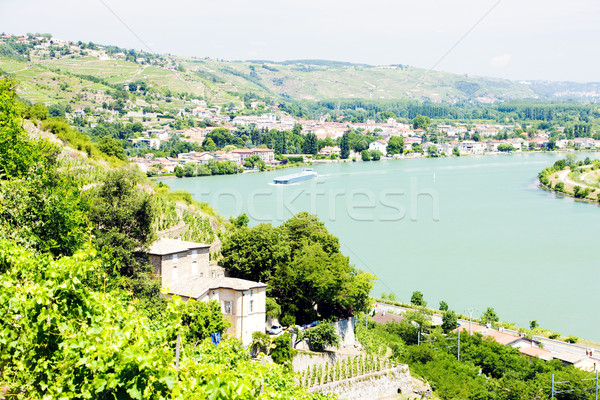 vineyard of Chateau Grillet, Rhone-Alpes, France Stock photo © phbcz