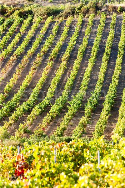 vineyars near Tautavel, Languedoc-Roussillon, France Stock photo © phbcz