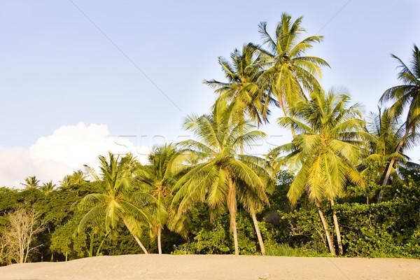 Turtle Beach, Tobago Stock photo © phbcz