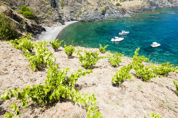 vineyard on Cap de Peyrefite near Cerbere, Languedoc-Roussillon, Stock photo © phbcz