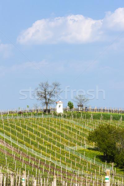spring vineyards near Nemcicky, Czech Republic Stock photo © phbcz