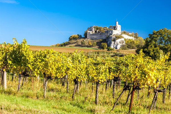 Stock photo: ruins of Falkenstein Castle with vineyard in autumn, Lower Austr