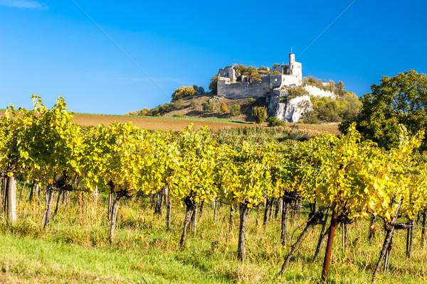 ruins of Falkenstein Castle with vineyard in autumn, Lower Austr Stock photo © phbcz