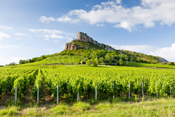 Solutre Rock with vineyards, Burgundy, France Stock photo © phbcz