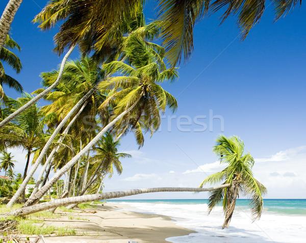 Stockfoto: Grenada · boom · landschap · zee · zomer · palm