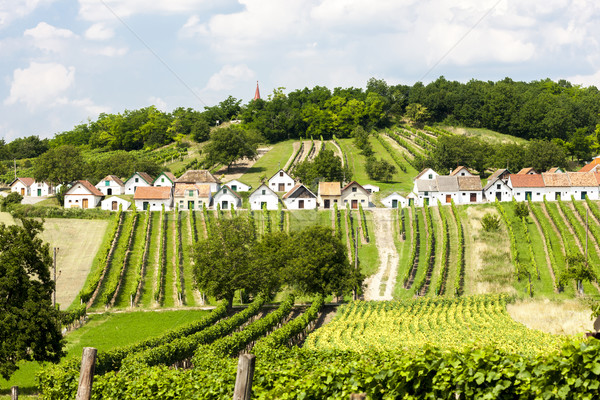 Vin baisser Autriche architecture Europe vigne Photo stock © phbcz