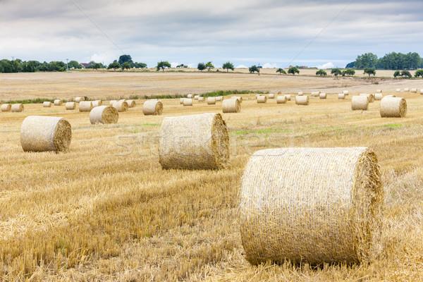 Paille domaine République tchèque grain Photo stock © phbcz