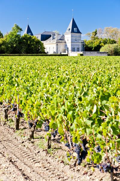 vineyard and Chateau Tronquoy Lalande, Saint-Estephe, Bordeaux R Stock photo © phbcz