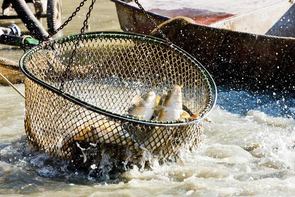 収穫 池 魚 釣り 純 ストックフォト © phbcz