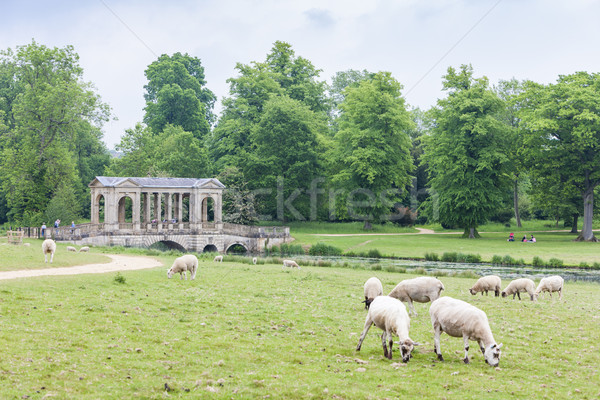 sheep with Palladin Bridge at background, Stowe, Buckinghamshire Stock photo © phbcz