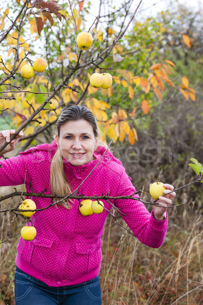 woman with autumnal apple tree Stock photo © phbcz