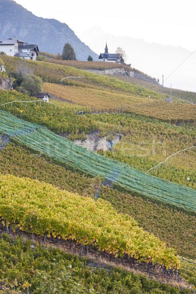Сток-фото: регион · Швейцария · природы · Церкви · винограда · осень