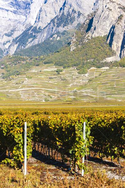 vineyards in Ardon region, canton Valais, Switzerland Stock photo © phbcz