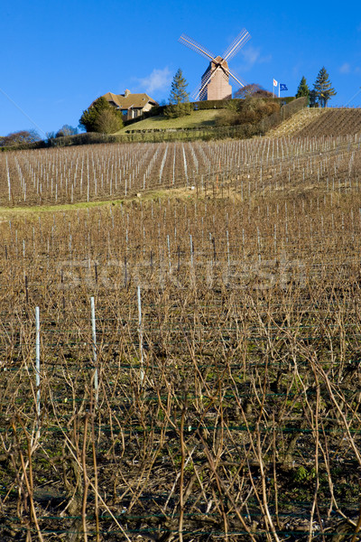 windmill and vineyard near Verzenay, Champagne Region, Burgundy, Stock photo © phbcz
